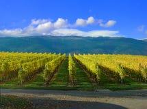 швейцарский виноградник Стоковая Фотография RF