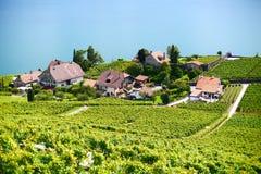 швейцарский виноградник стоковое фото rf