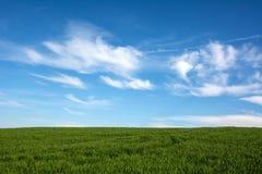 Швейцарское земледелие - поле зеленой травы с красивым облаком - Стоковая Фотография RF