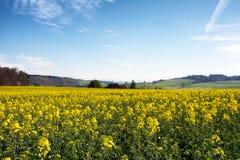 Швейцарское земледелие - поле рапса с красивым облаком - завод для зеленой энергии Стоковые Фото