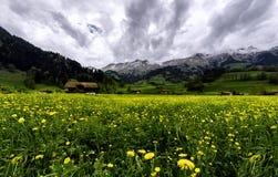 Швейцарское поле Стоковая Фотография