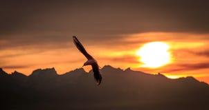 Швейцарское alpe стоковая фотография