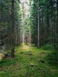 Шведская пуща Стоковые Изображения