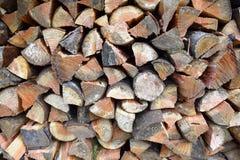 Швырок ели Дугласа Стоковые Фото