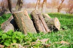 Швырок на зеленой траве, внешнем воссоздании, весне, лете Стоковое фото RF