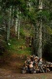 Швырок на лужайке в лесе стоковые изображения