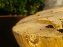 Швырок сада Стоковые Изображения RF