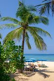 Шезлонги под зонтиками и пальмами на тропическом пляже стоковое фото rf