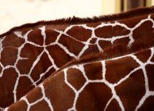 шеи giraffe Стоковые Фотографии RF