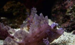 шейх sharm скорпиона положения рыб el Стоковые Фото