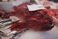 шейх sharm скорпиона положения рыб el Стоковое фото RF