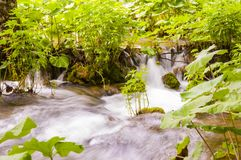 Шелковистые потоки водопада окруженные заводами леса в озерах национальном парке Plitvice, Хорватии Стоковые Фотографии RF