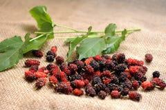 шелковица плодоовощ стоковые фотографии rf