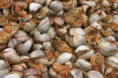 шелухи кокоса Стоковое Фото