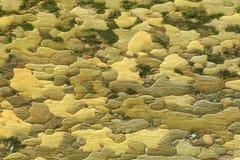 Шелушась расшива плоского дерева, формируя похожие на зигзаг картины Стоковое Изображение