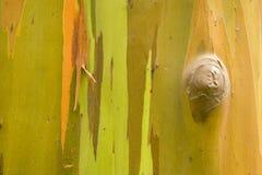 шелушение расшивы Стоковая Фотография RF