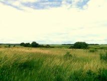 Шепот травы Стоковые Фото