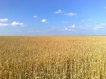 Шепот травы Стоковое фото RF