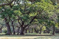 Шепча деревья Стоковые Изображения