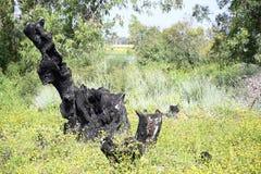 Шерон национальный Forest Park стоковые изображения