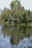 Шерон национальный Forest Park стоковые фото