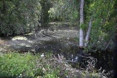 Шерон национальный Forest Park стоковое фото