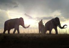 Шерстистые мамонты в заходе солнца Стоковое Изображение
