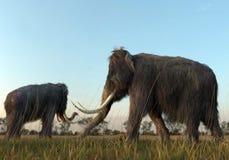 Шерстистые мамонты в утре Солнце Стоковые Изображения RF