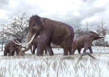 Шерстистые мамонты пася Стоковая Фотография
