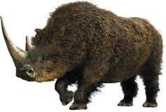 Шерстистый носорог Стоковая Фотография