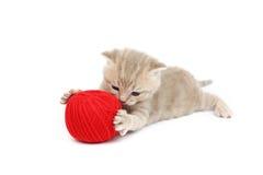 шерсти красного цвета кота шарика Стоковое Фото