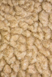 шерсти овец Стоковая Фотография