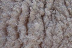 Шерсти текстурируют подробно от овцы в реальном маштабе времени Стоковые Изображения