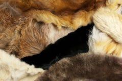 шерсть животных различная Стоковая Фотография