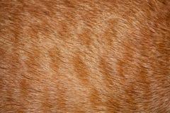 шерсть кота Стоковое фото RF