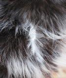 шерсть кота стоковое изображение rf