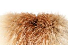 шерсть лисицы конца 2 изолированная вверх по зиме Стоковые Изображения RF