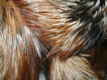 шерсть лисицы Стоковое фото RF
