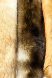 шерсть лисицы стоковые фото
