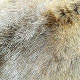 шерсть предпосылки естественная Стоковое фото RF