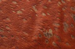 шерсть Стоковые Фотографии RF