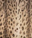 Шерсть 2 леопарда стоковое фото