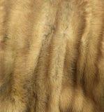 шерсть Стоковое фото RF