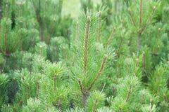 Шерст-дерево Стоковое фото RF