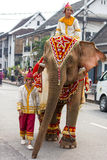 Шествие слона на Новый Год 2014 Lao в Luang Prabang, Лаосе Стоковая Фотография