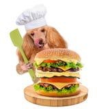 Шеф-повар собаки стоковое фото rf