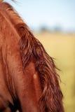 Шея лошади стоковые изображения rf