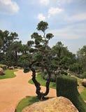 Вычурно уравновешенные деревья, цветки и валуны стоковая фотография rf