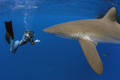 Шелковистая акула с девушкой, Галапагос Стоковая Фотография