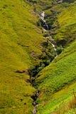 Шелковистый злаковик с малым потоком Стоковое фото RF